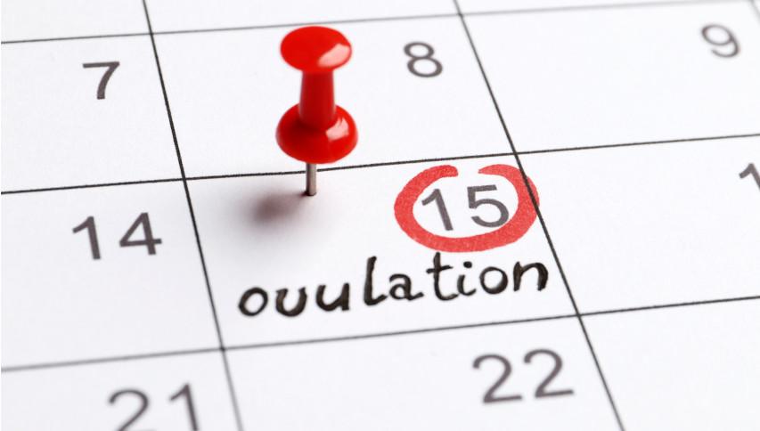"""<span itemprop=""""name"""">Ovulation Calendar</span>"""